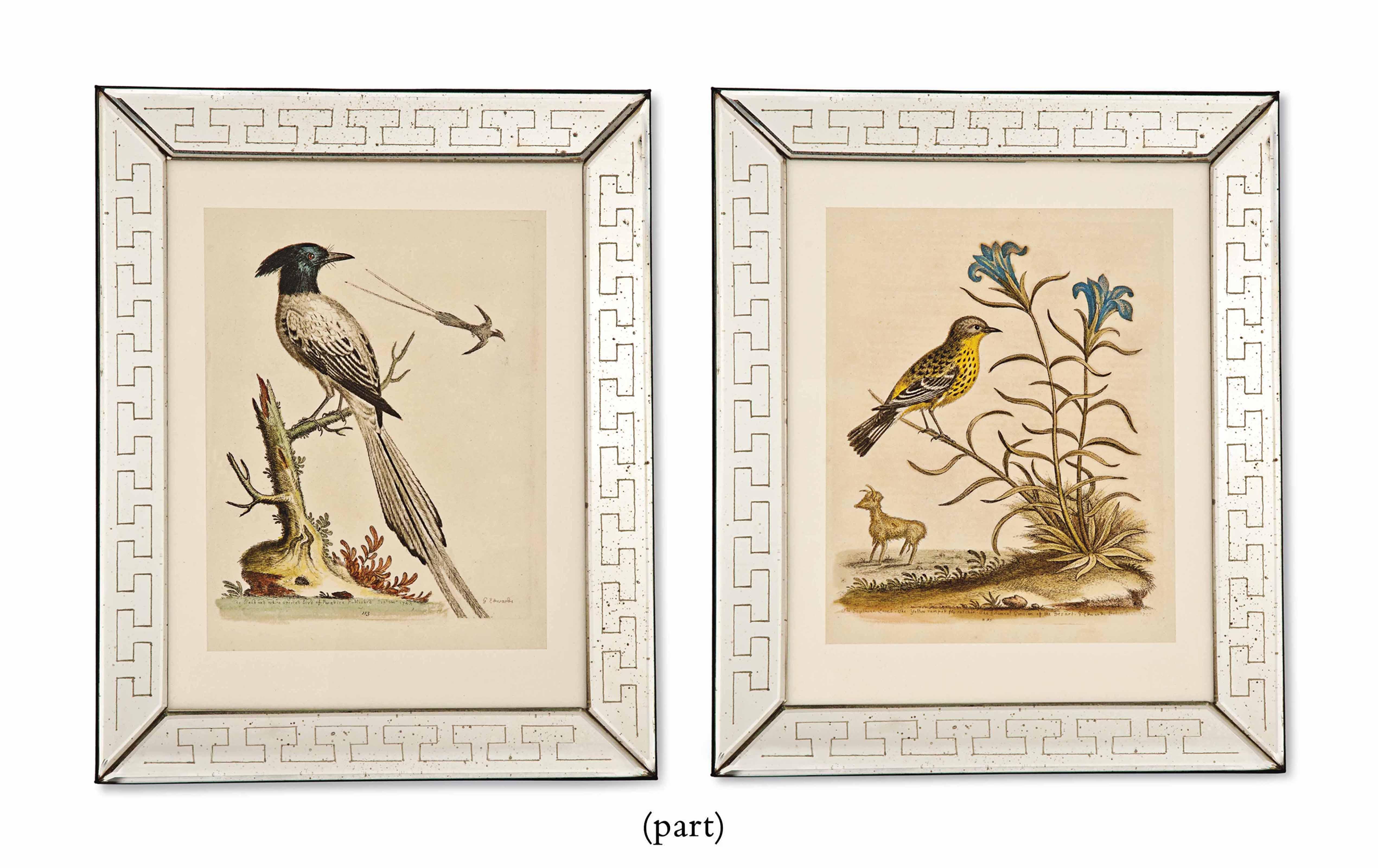 TWELVE HAND-COLOURED ETCHINGS OF BIRDS