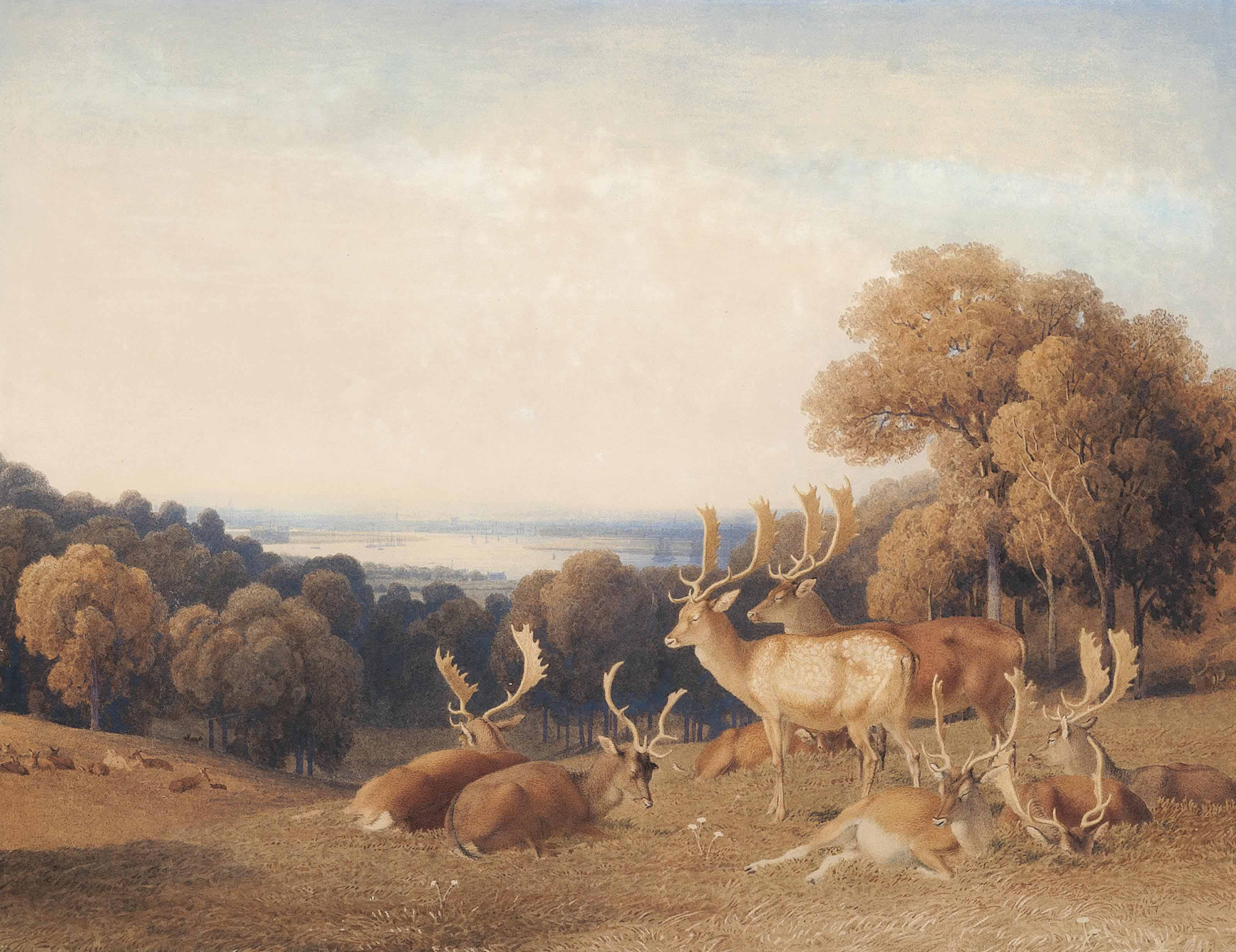 Stags on Richmond Hill, the Thames beyond
