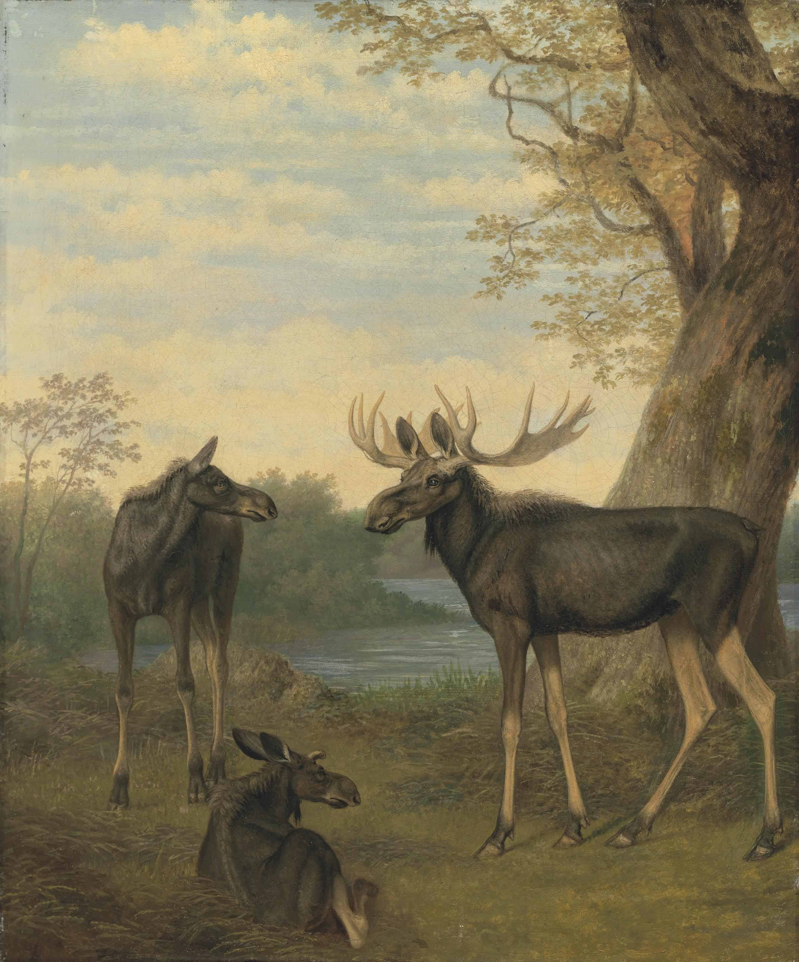 Elk in a river landscape