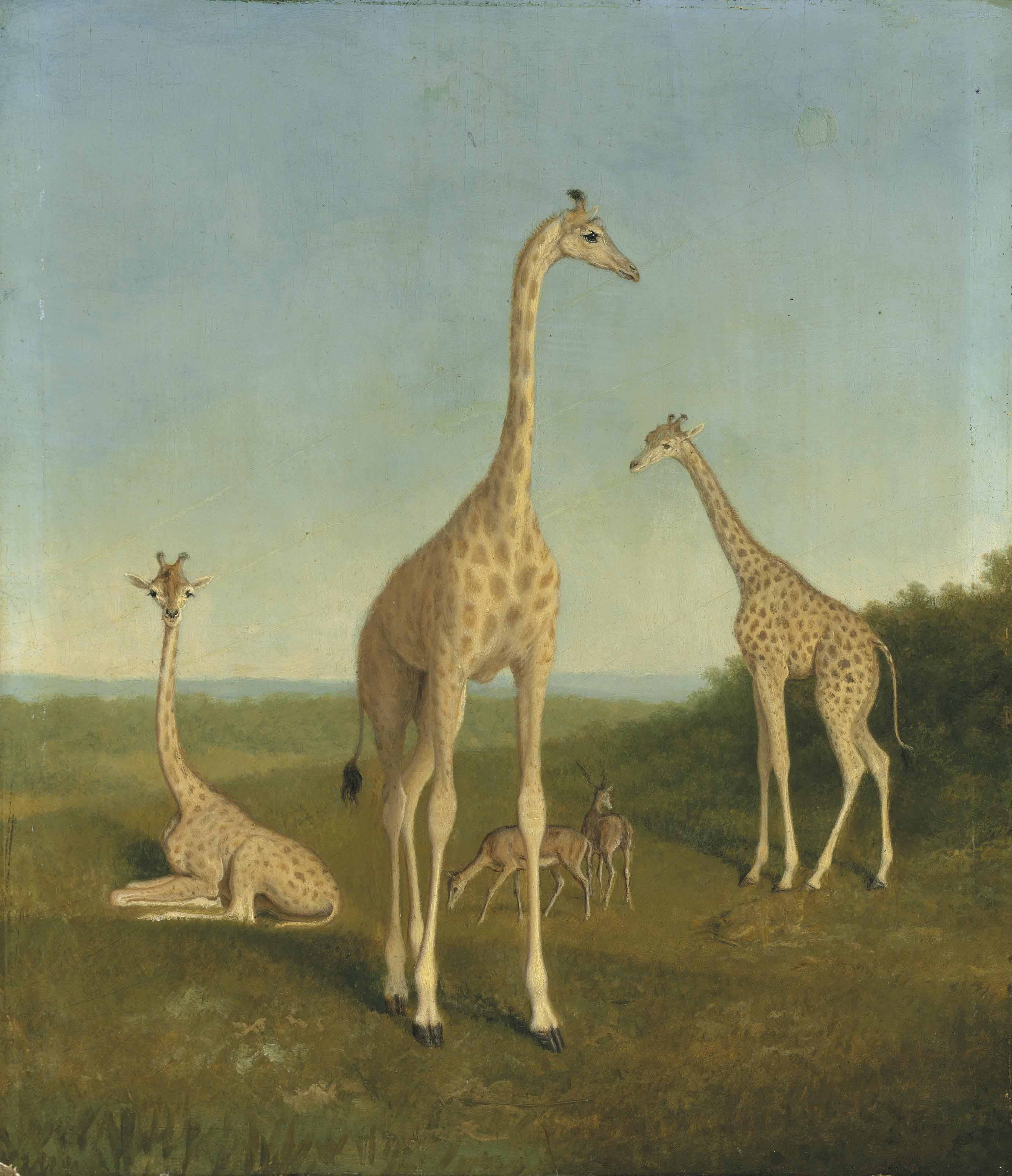 Giraffes with impala in a landscape