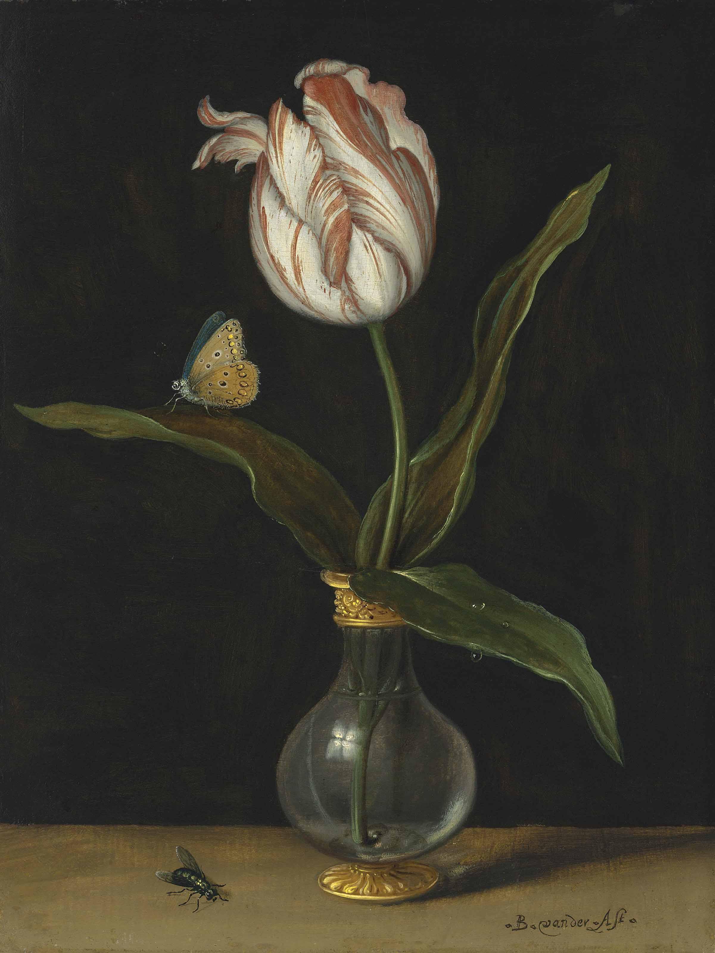 The 'Zomerschoon' tulip