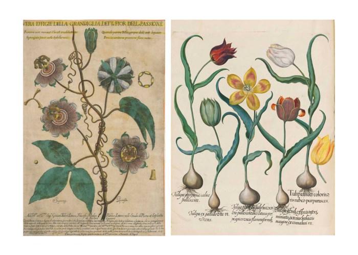 BESLER, Basilius (1561-1629) H
