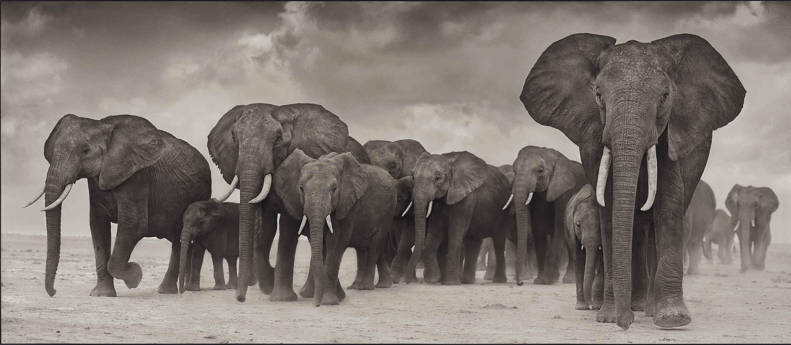 Elephants on the Move, 2006