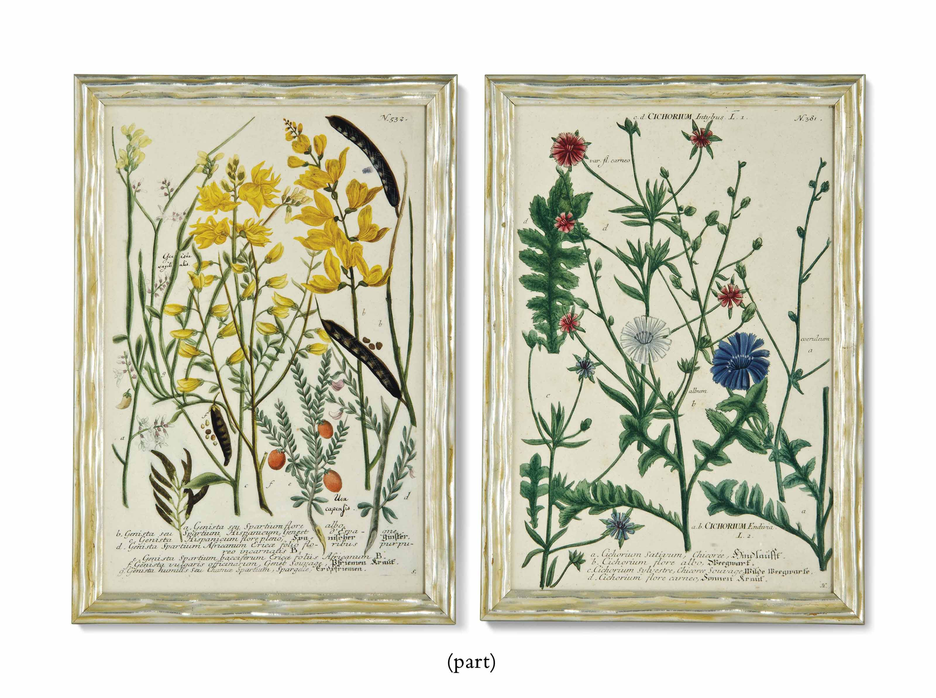 SIXTEEN HAND-COLOURED BOTANICAL ENGRAVINGS FROM WEINMANN'S 'PHYTANTHOZA ICONOGRAPHIA'