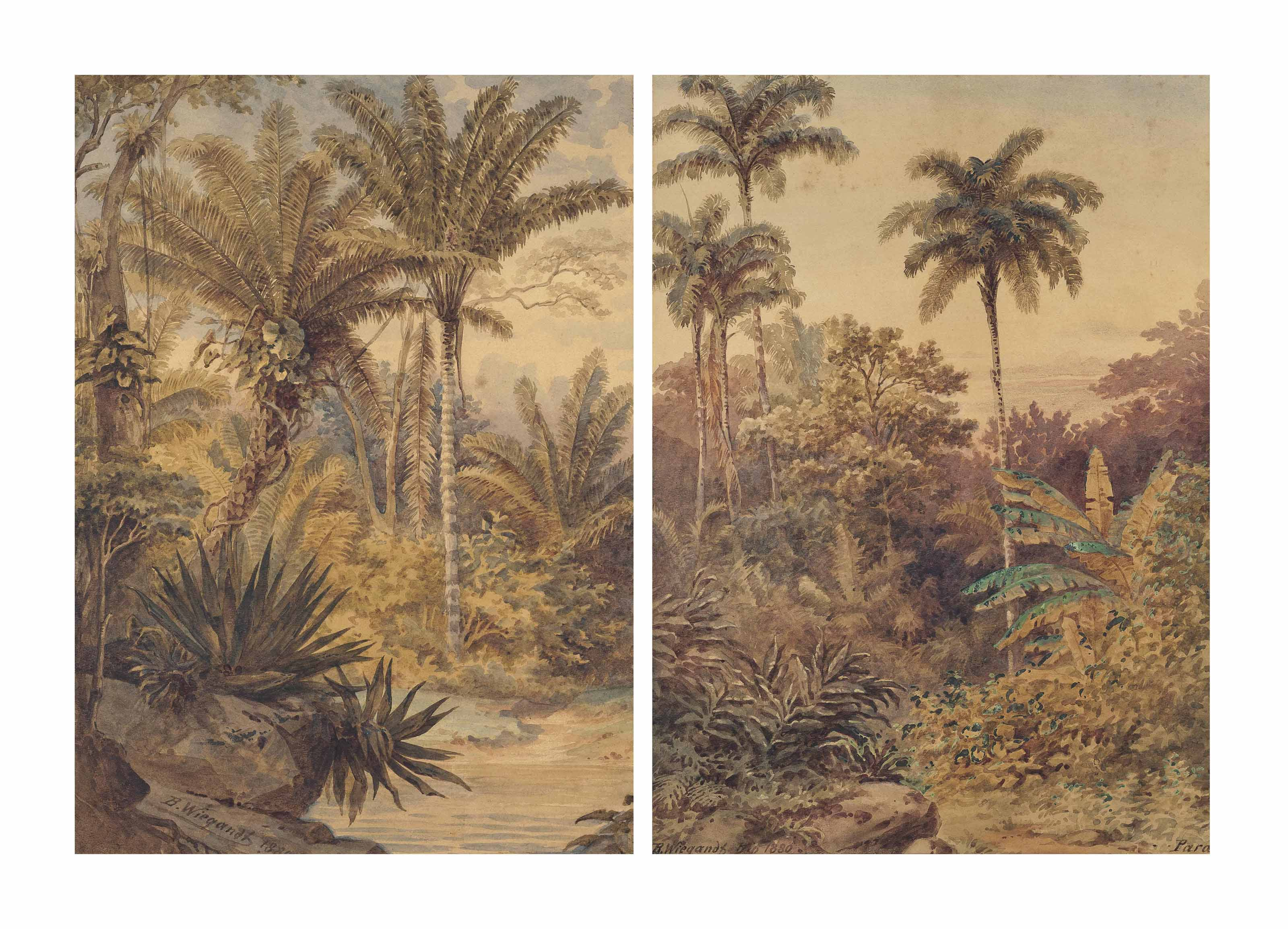 Brazillian rainforests, Pará
