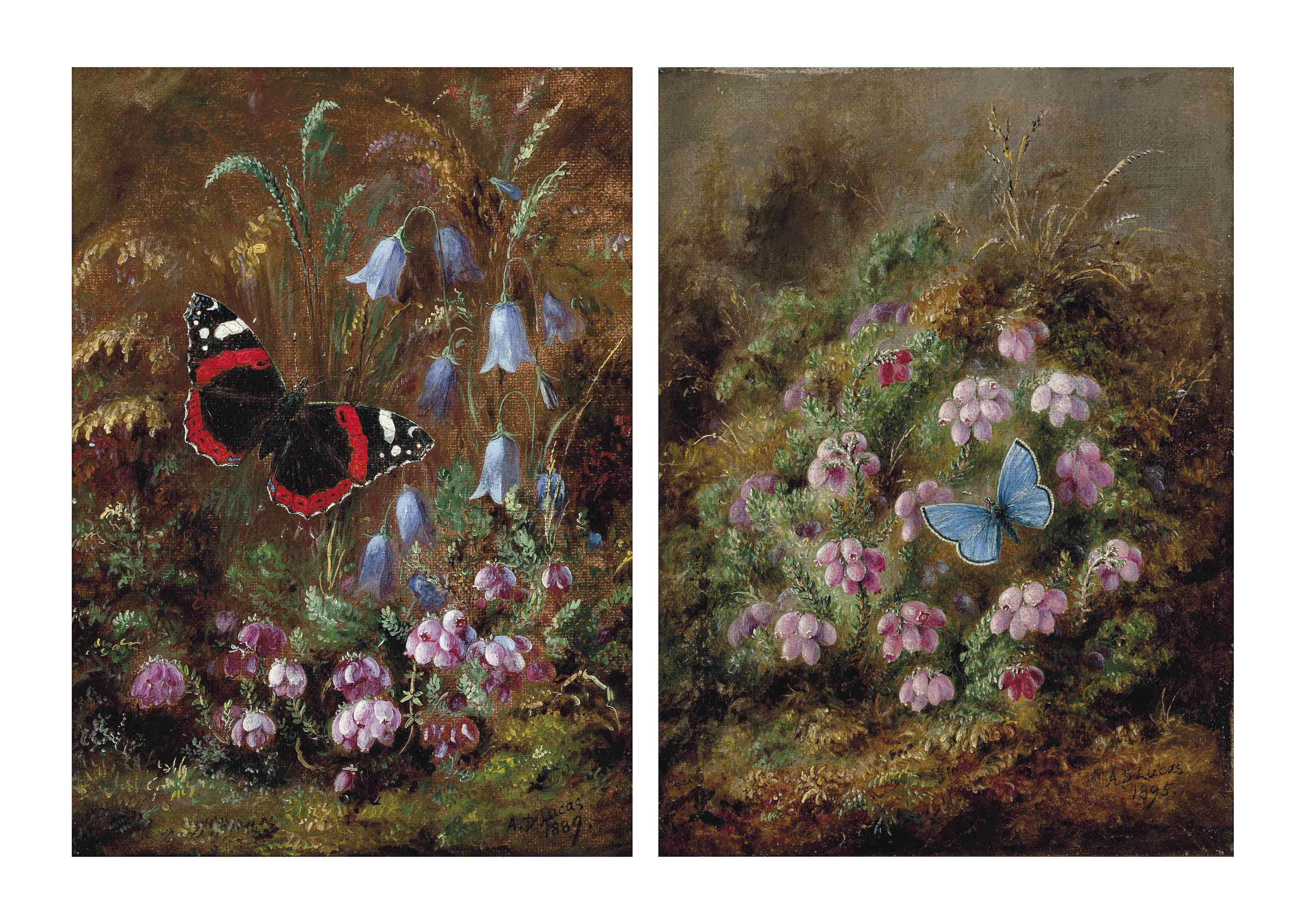 A red admiral butterfly among hairbells; and A silver studded blue butterfly amongst heather
