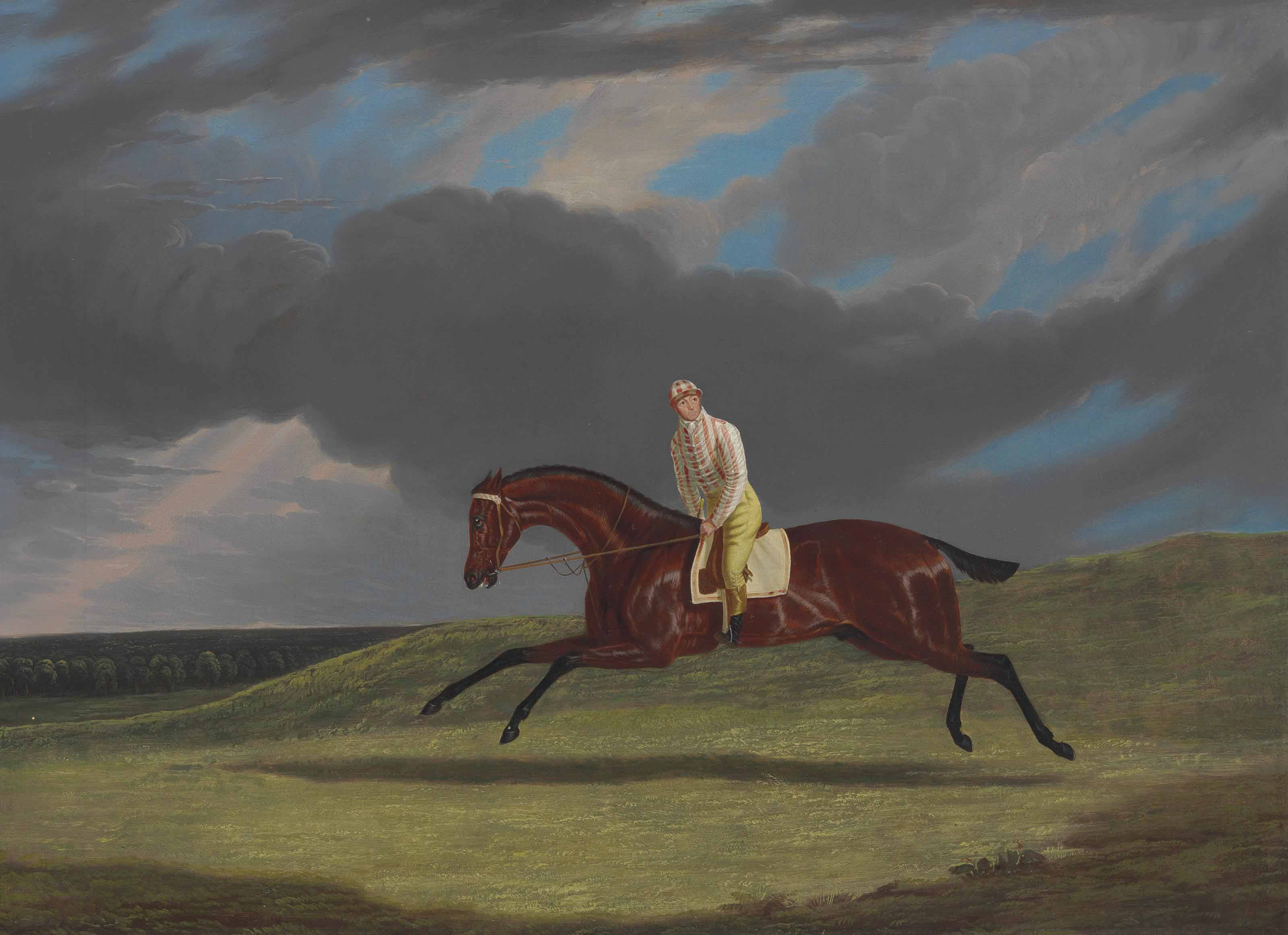 'Corduroy,' a Bay Racehorse, with a Jockey up, Galloping on a Racecourse