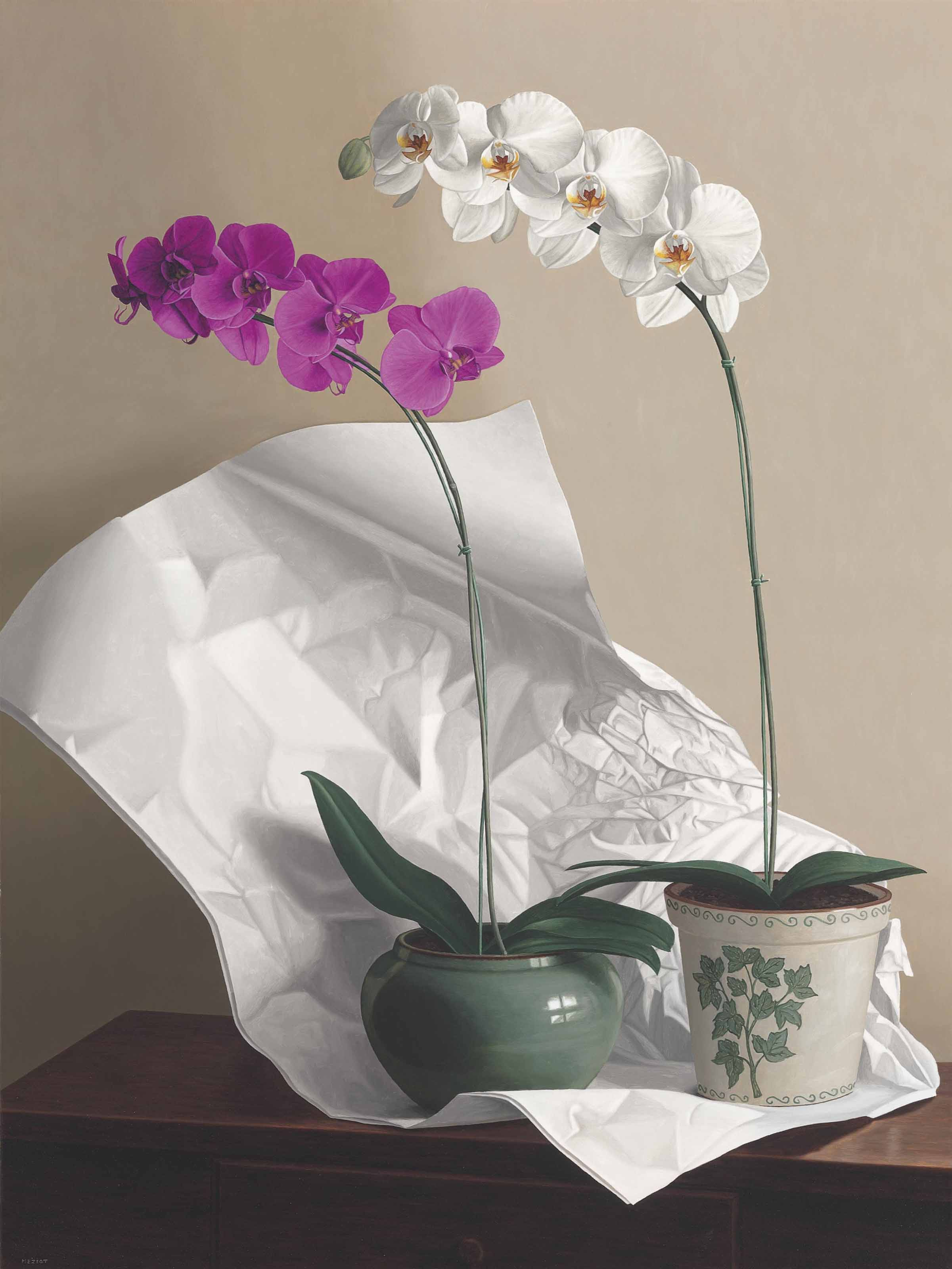 Orchids with Paper