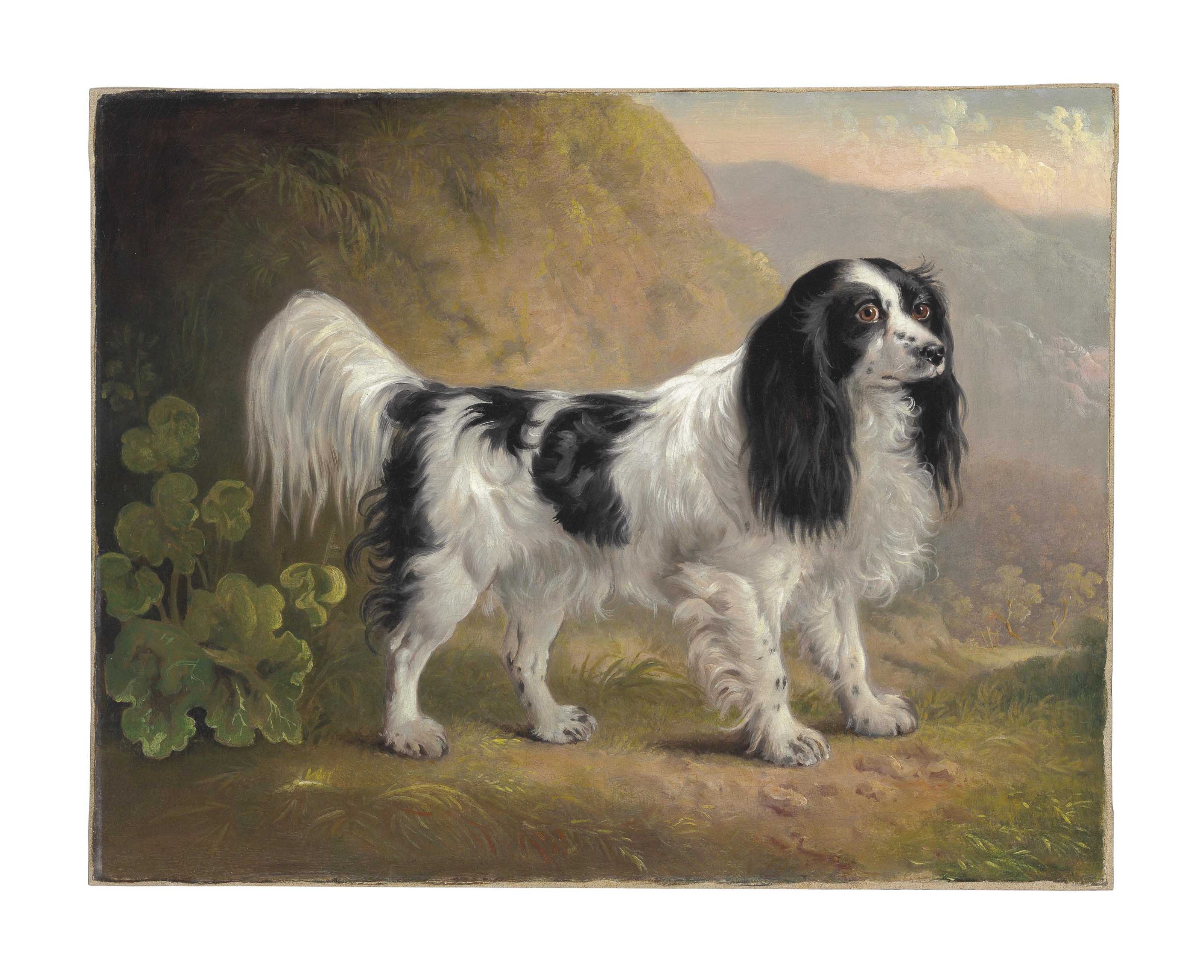 A Black and White English Springer Spaniel in a Landscape