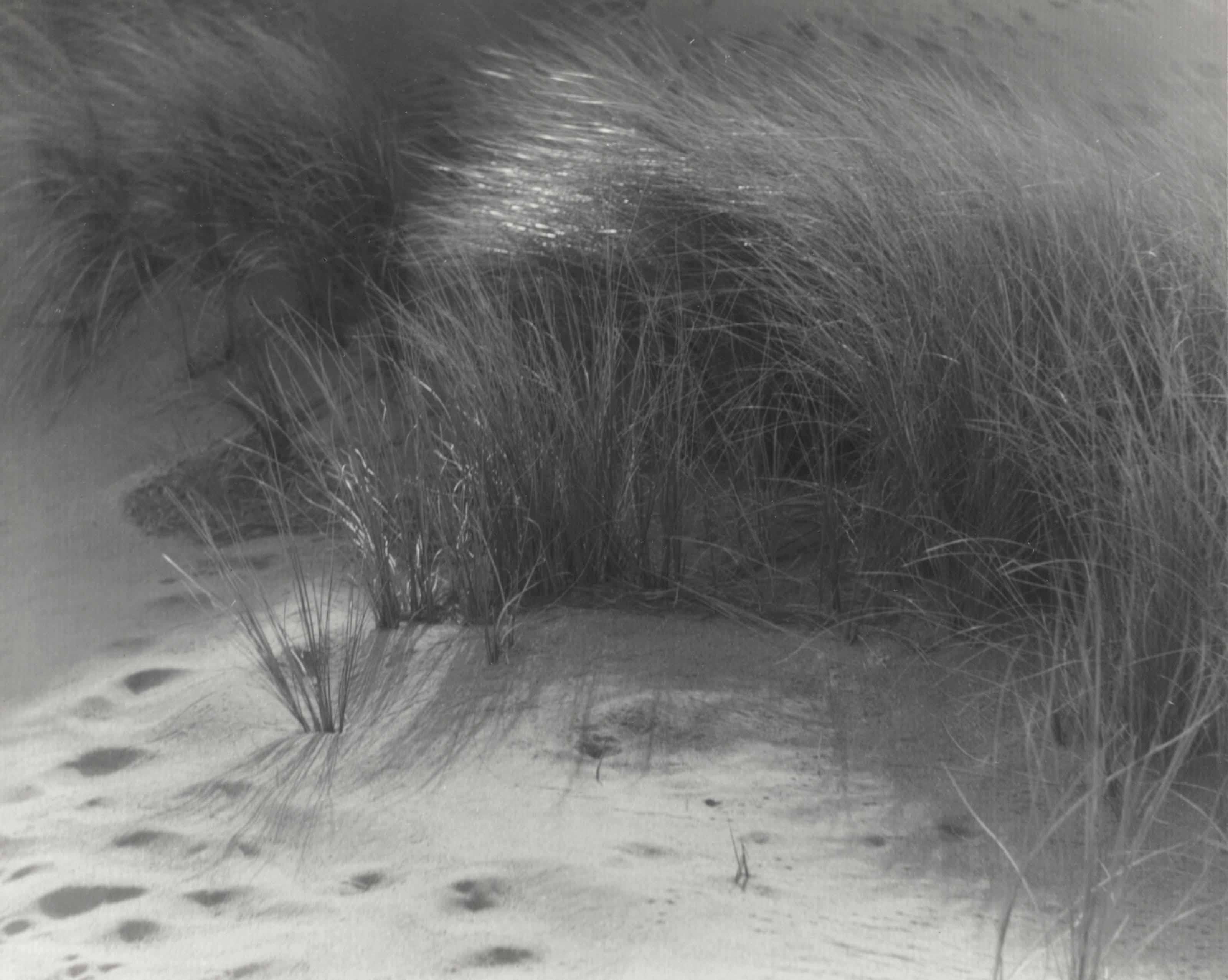 Grasses, c. 1920