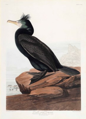 JOHN JAMES AUDUBON, after. – H
