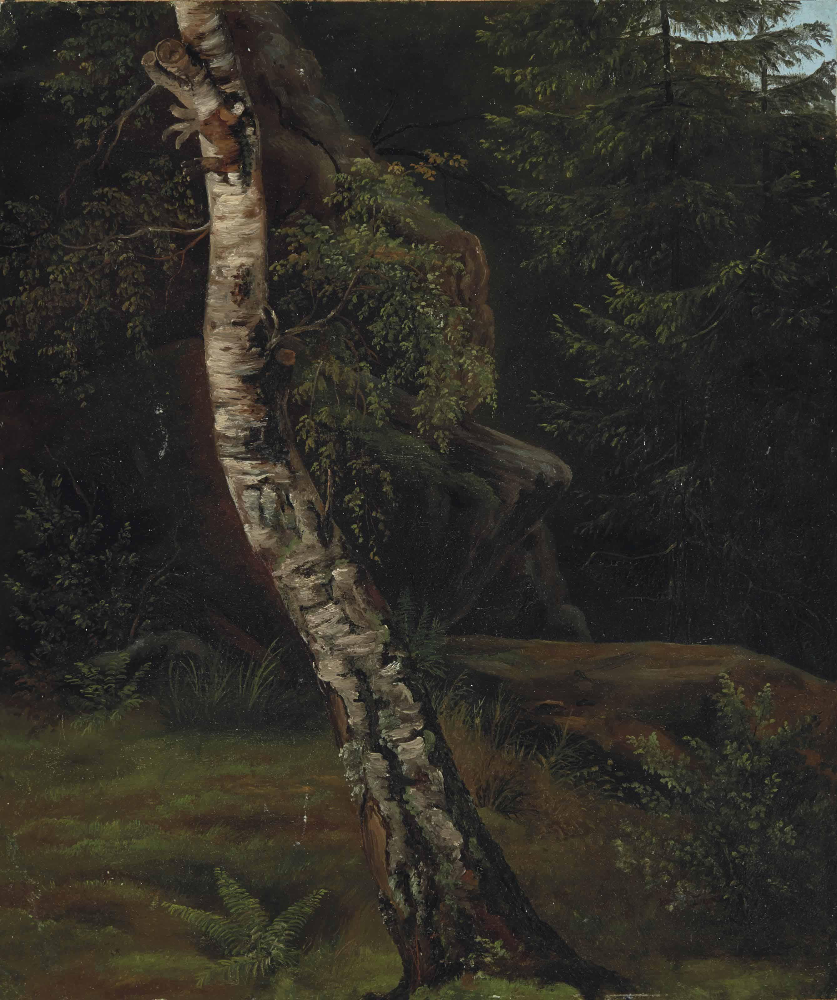Étude d'arbre