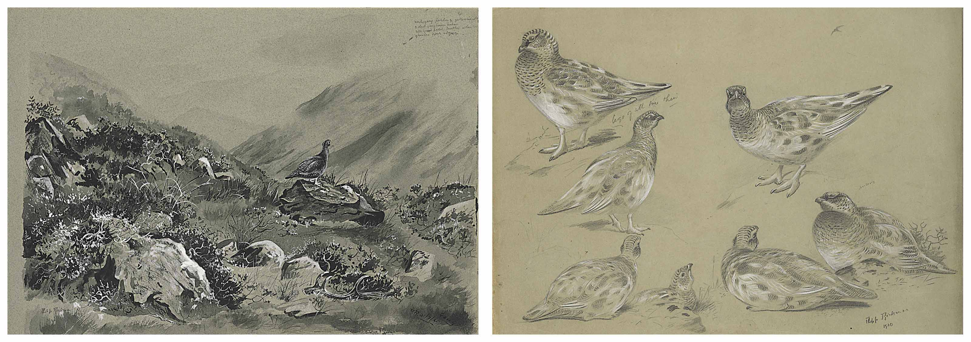 An album of landscapes and bird studies at Gaick, Inverness-shire