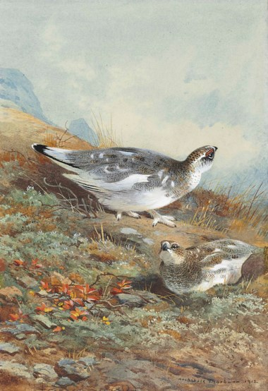 Archibald Thorburn (1860-1935), A pair of ptarmigan in mid-plumage. 11⅛ x 7 ½  in (28.2 x 19  cm). Estimate £10,000-15,000. This lot is offered in The Astor Collection From Tillypronie, Aberdeenshire on 15 December 2017  at Christie's in London