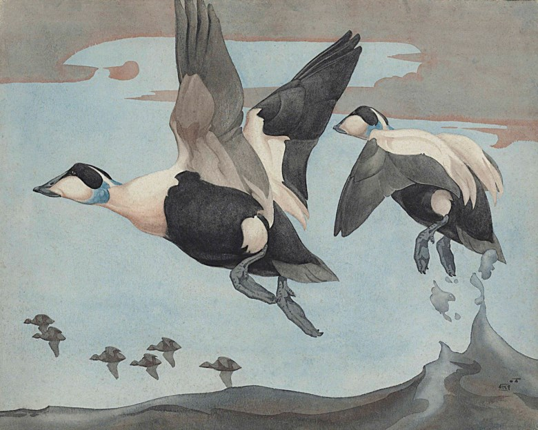 Richard Barrett Talbot Kelly (1896-1971), Eider in Flight. 21¼ x 27 in (54 x 68.6  cm). Estimate £3,000-5,000. This lot is offered in The Astor Collection From Tillypronie, Aberdeenshire on 15 December 2017  at Christie's in London