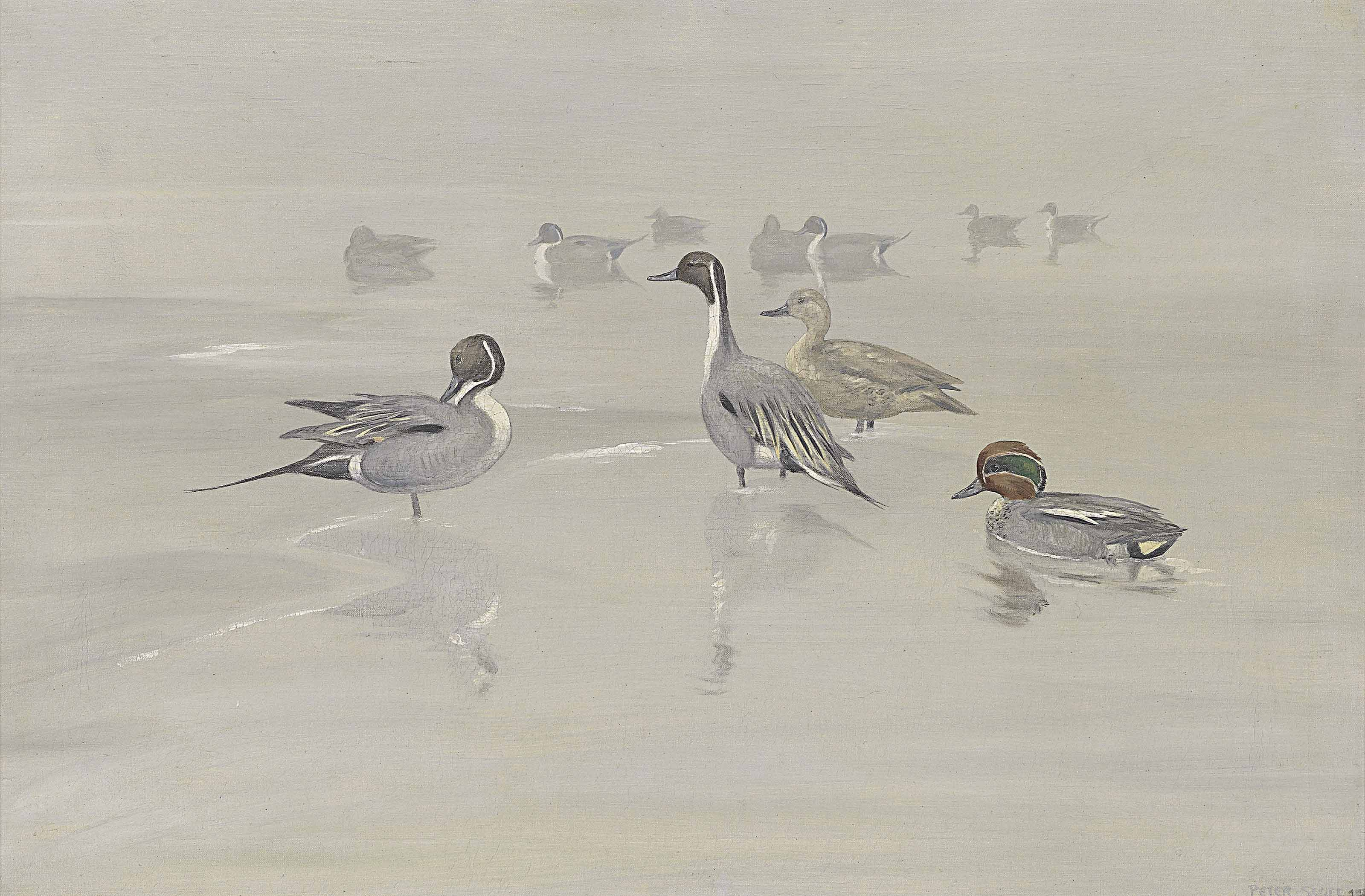 Pintails and green-winged teal