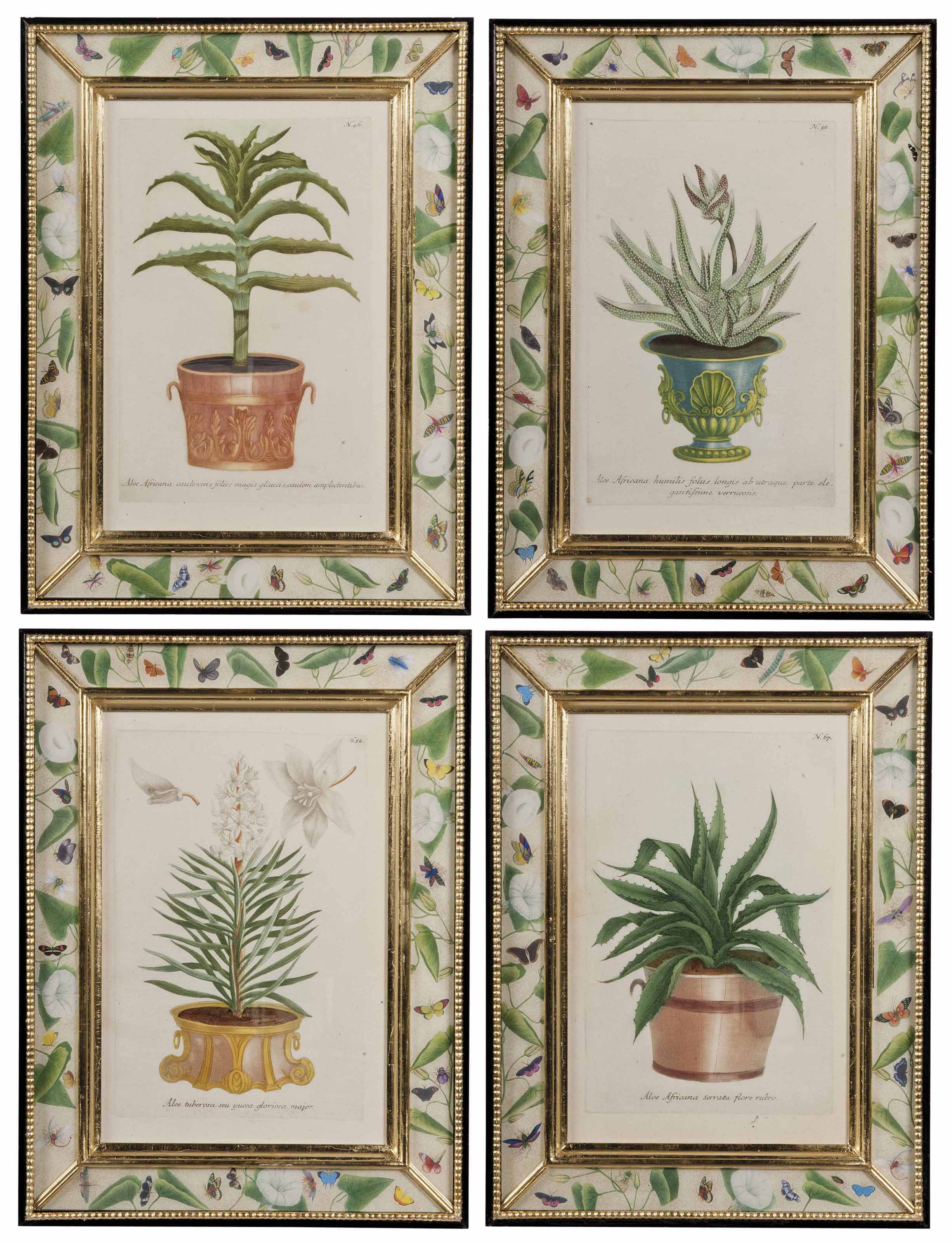 A SET OF TWEVLE HAND-COLOURED MEZZOTINTS OF BOTANICAL STUDIES OF ALOE AND AGAVE