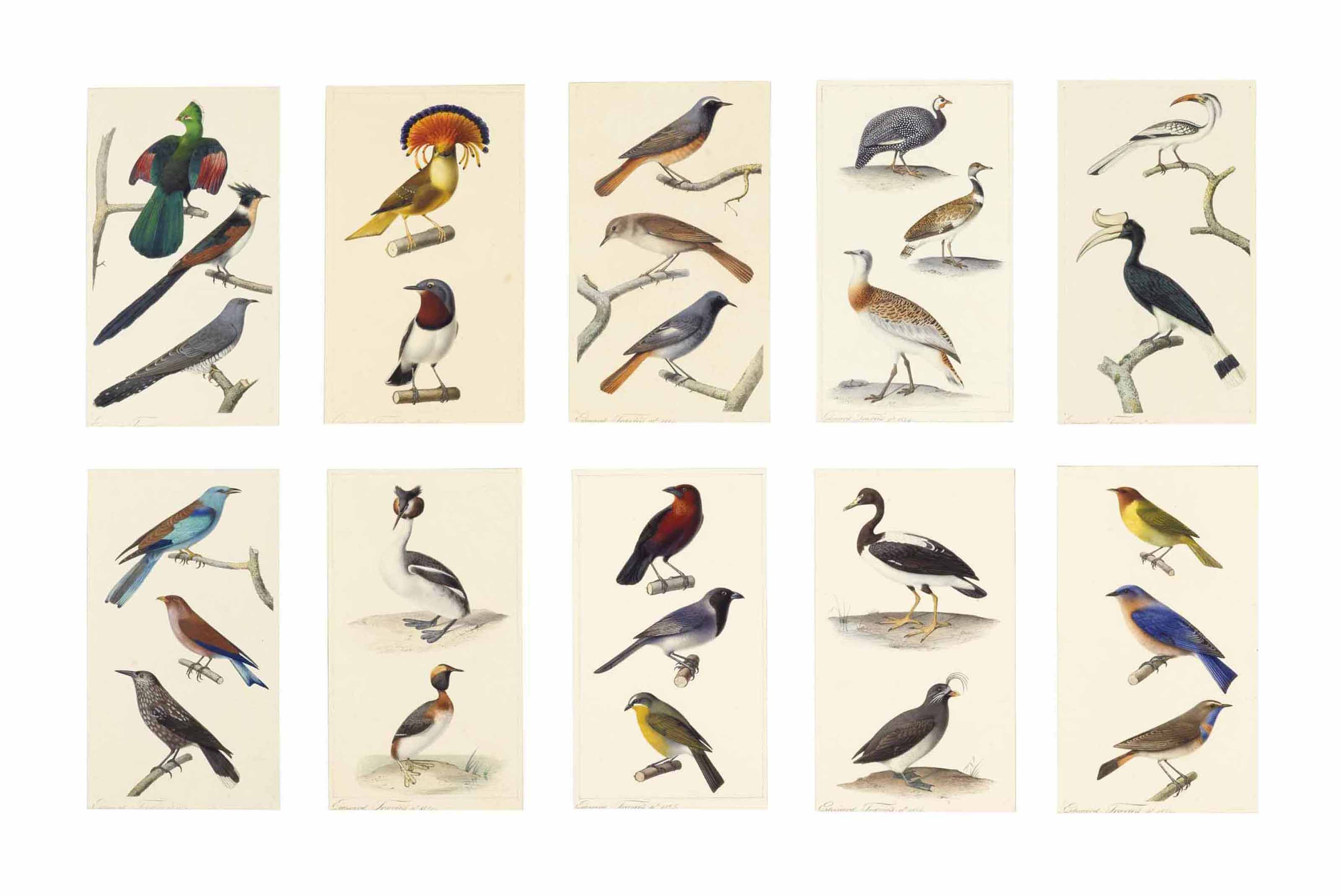 Studies of birds: Livingstone's tauraco, Red-winged crested cuckoo, and Common cuckoo; Royal flycatcher and Scarlet-spectacled wattle-eye; Common redstart, Nightingale, and Black redstart; Helmeted guinea fowl, Little bustard, and Great bustard; Red-billed hornbill and Rhinoceros hornbill; European roller, Broad-billed roller, and Nutcracker; Great crested grebe and Slavonian grebe; Crimson-backed tanager, Blacked-faced cuckoo-shrike, and Sulphur-breasted bush shrike; Magpie goose and Crested auklet; and Red-headed bunting, Eastern bluebird, and Bluethroat