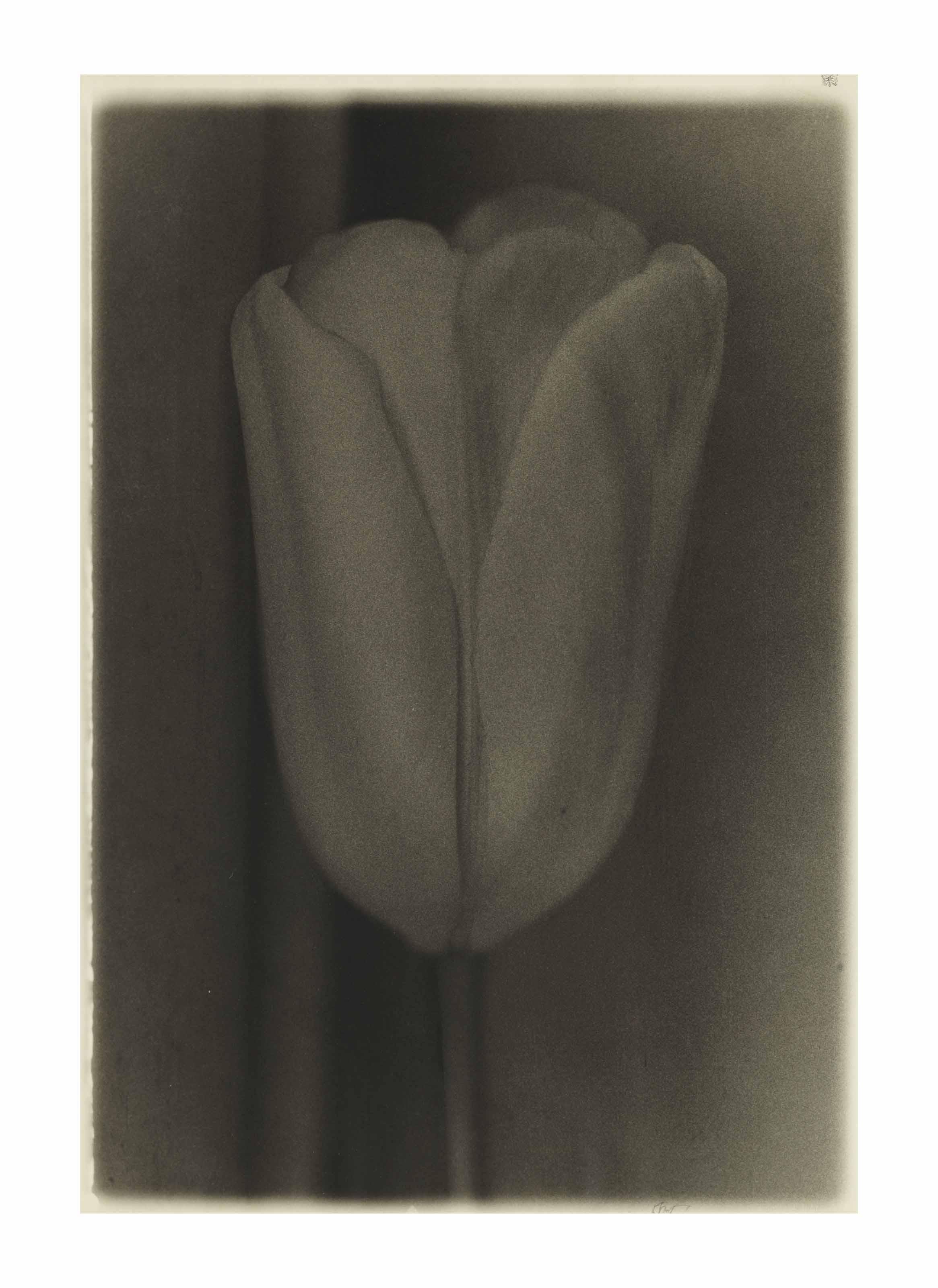 Tulip, 1978