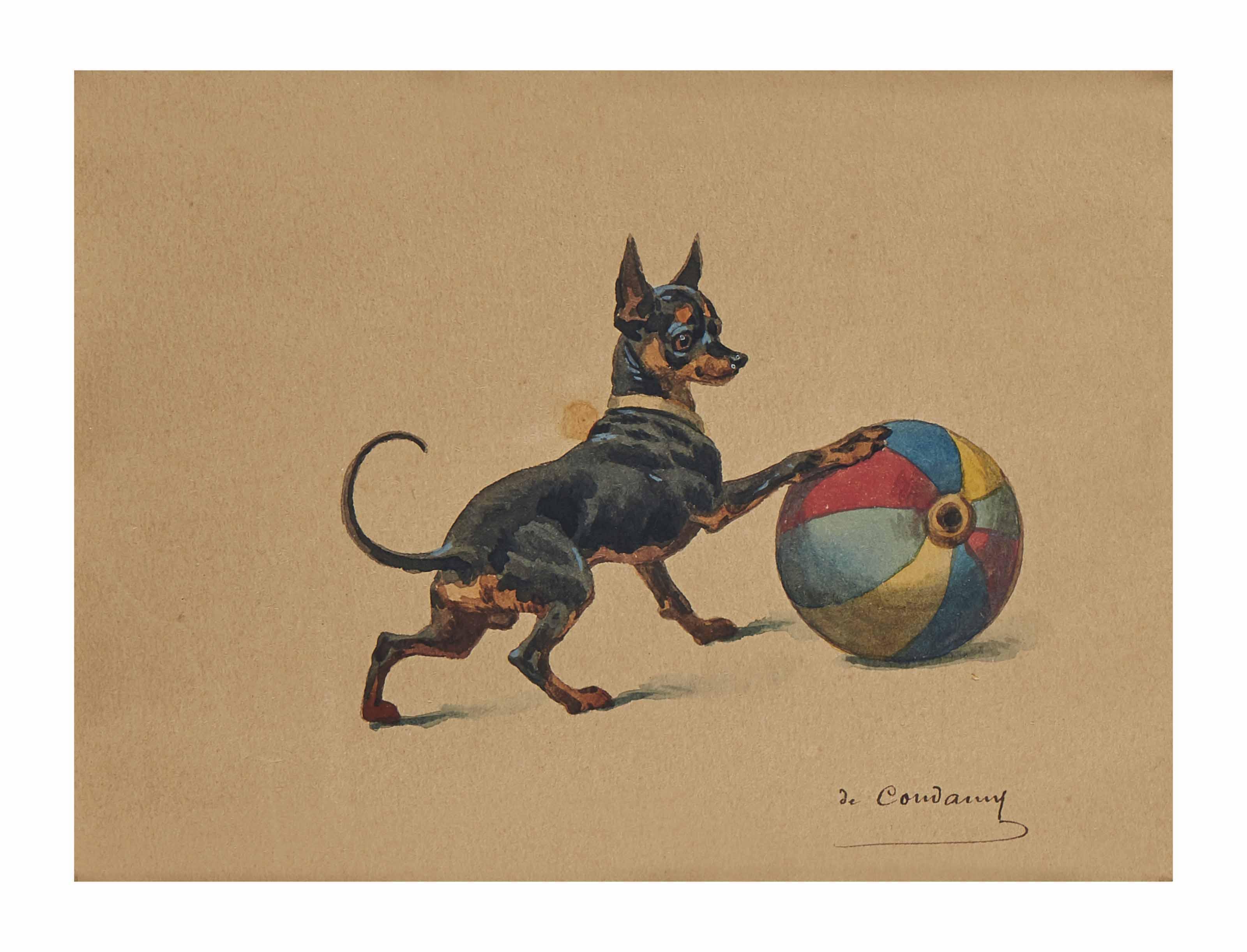 Terrier d'agrément anglais jouant avec un ballon