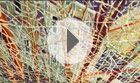 Gallery Talk: Peter Doig's The auction at Christies