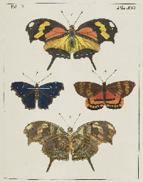 Drury Illustrations Of Natural History