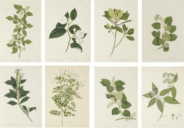 Calcutta School Circa 1800 1805 Eight Botanical Studies