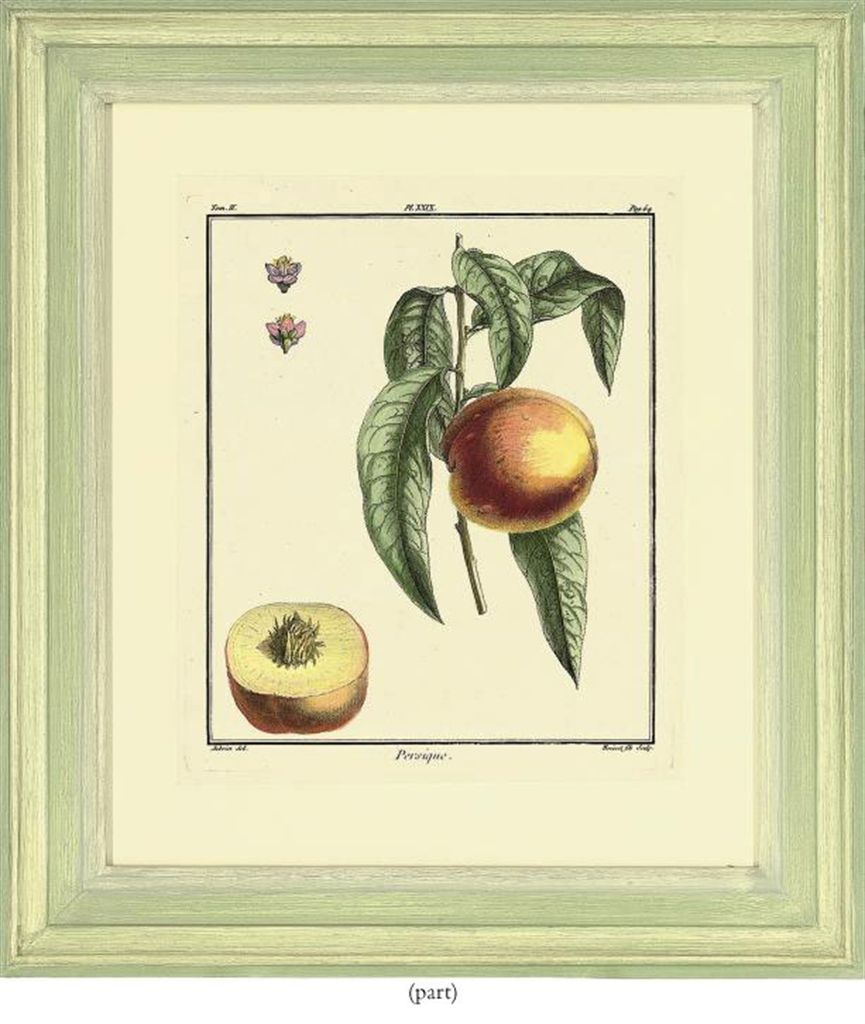 After claude aubriet fruit studies from traite des for Arbre fruitier