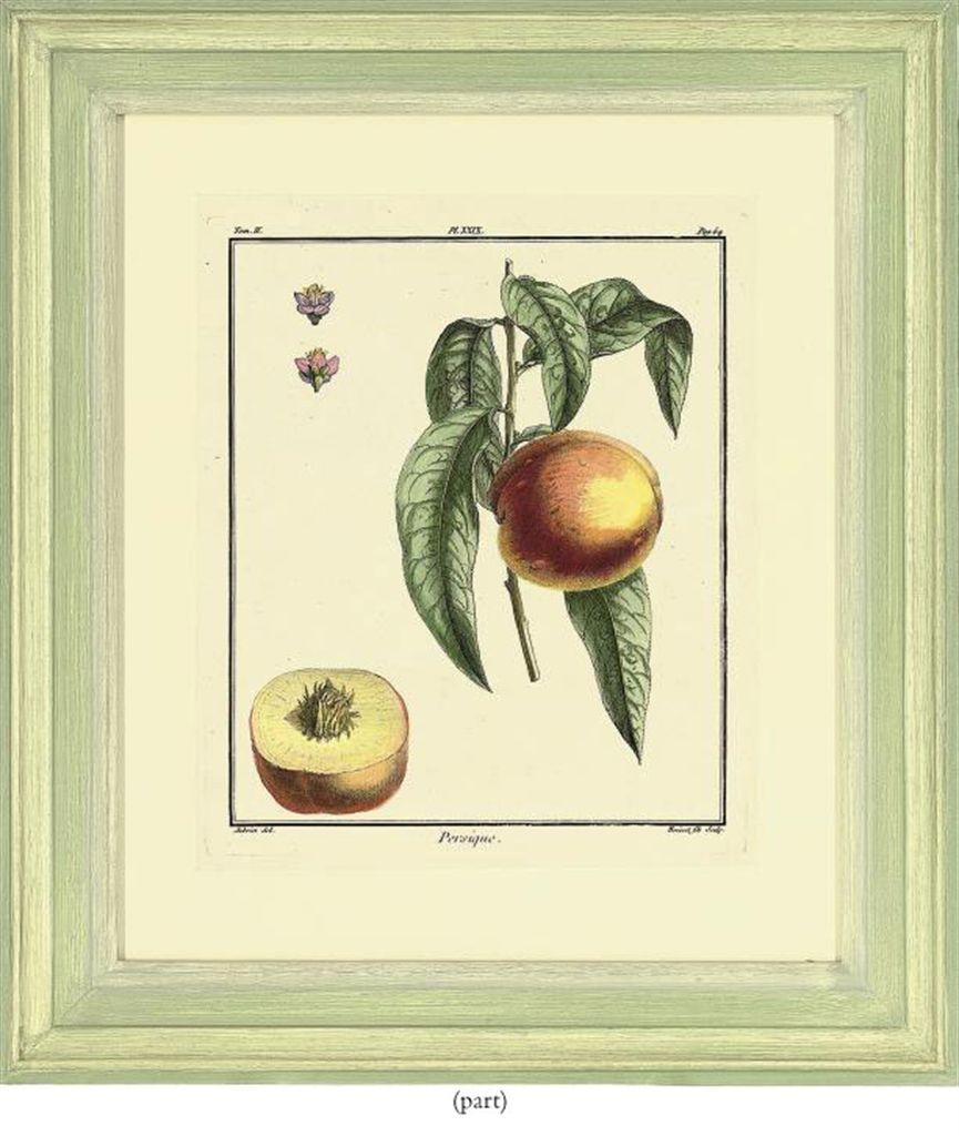 After claude aubriet fruit studies from traite des for Arbre fruitier