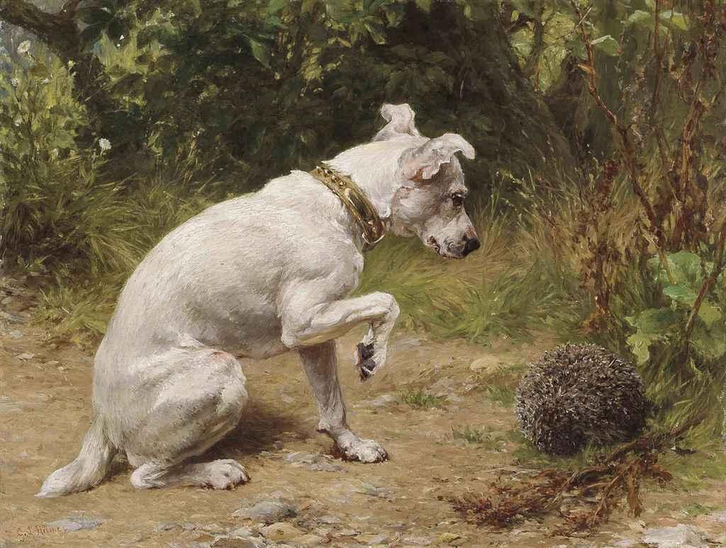 dog walker geneve