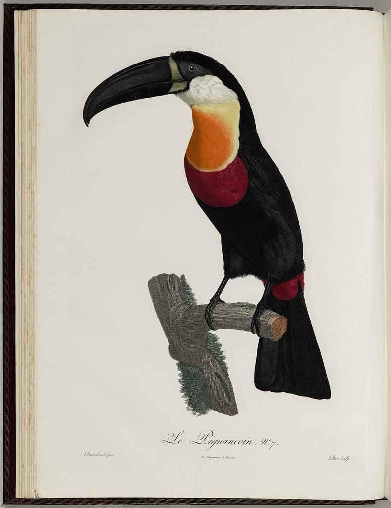 levaillant fran ois 1753 1824 histoire naturelle des oiseaux de paradis et des rolliers. Black Bedroom Furniture Sets. Home Design Ideas