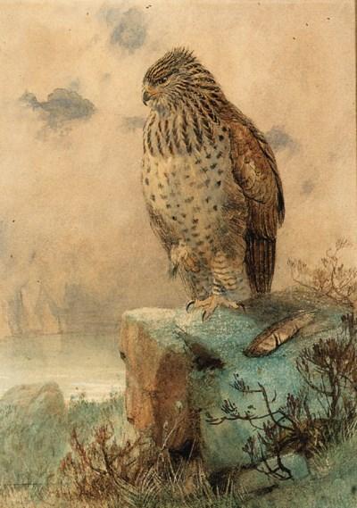 Joseph Wolf (1820-1899)
