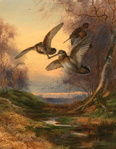 Archibald Thorburn (1860-1935)