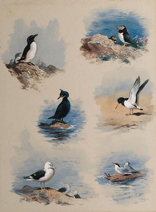 Archibald Thorburn (British, 1