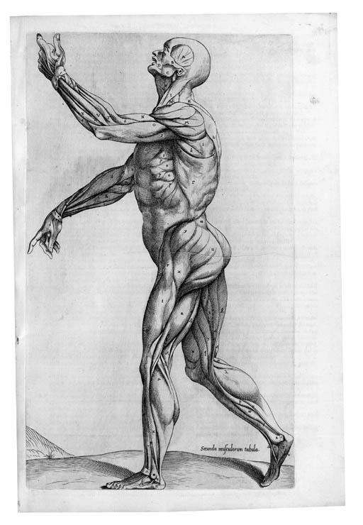 VESALIUS, Andreas (1514-64). L