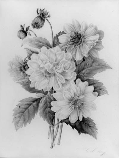 C.L. Leroy, early 19th Century
