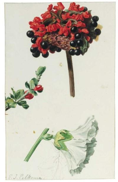 Eelke Jelles Eelkema (1788-183