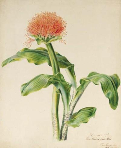 Petronella van Woensel (1785-1
