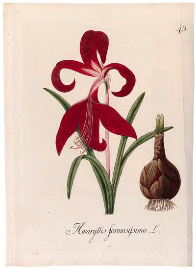 JOHANN SIMON KERNER (1755-1830