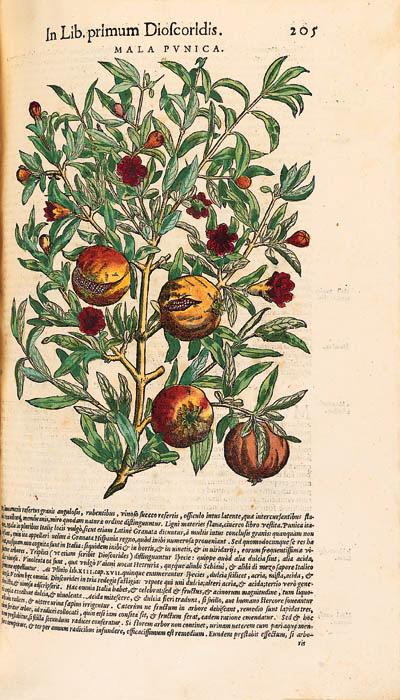 Pietro Andrea Mattioli (1500-1