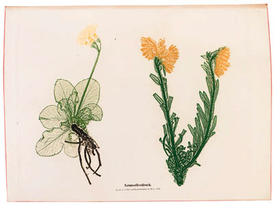 NATURE PRINTING - ALOIS AUER (