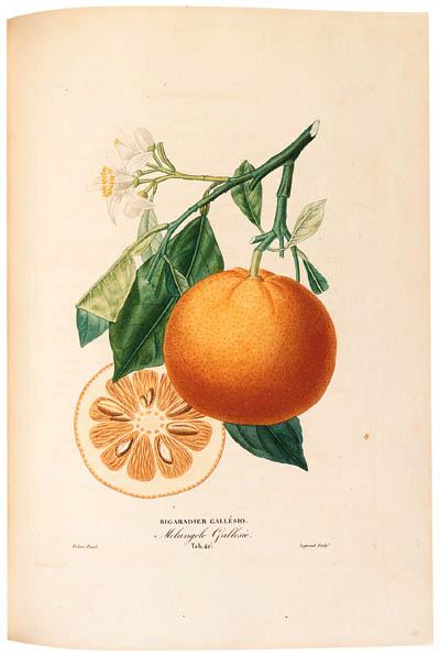 ANTOINE RISSO (1777-1854)