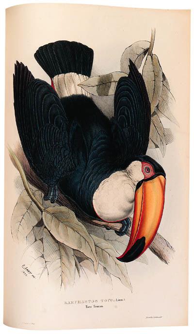 JOHN GOULD (1804-1881)