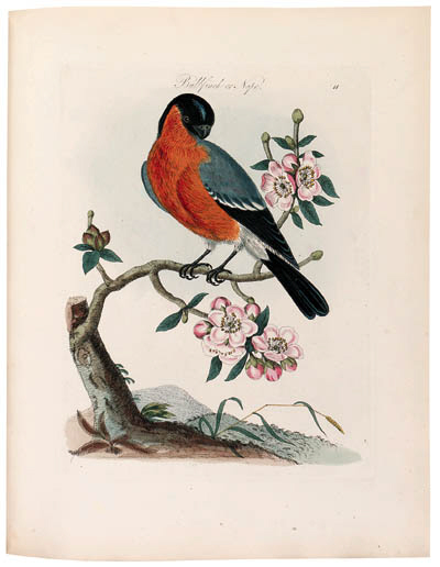 BOLTON, James (d. 1799). Harmo