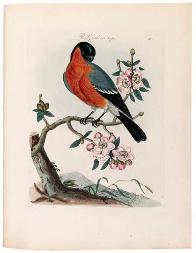 BOLTON, James (d. 1799). Harmonia Ruralis; or, An essay towards a natural history of British song birds ... a new edition. London: Henry G. Bohn, 1845.