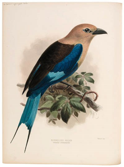 DRESSER, Henry Eeles (1838-191