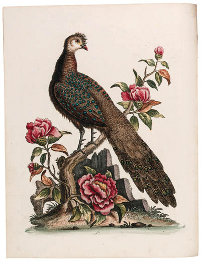EDWARDS, George (1694-1773). A Natural History of Uncommon Birds, and of some other rare and undescribed animals, quadrupeds, reptiles, fishes, insects, &c. London: for the author, [1739]-1743-1751. French title and text bound at the back of each volume. 210 hand-coloured etched plates, engraved title-vignette by J.S. Mller, engraved plate of 'un Samojeed'. (Some browning and spotting, offset browning, some small marginal tears; Part I, lacking frontispiece and extra plate; Part II, lacking pp. I-VIII and Q2 (French text leaf); Part III, small paper flaw to plate 140; Part IV, short tear to plate 162, plate 197 (unnumbered) supplied from another copy with wormholes to margin and short tear not affecting platemark.)
