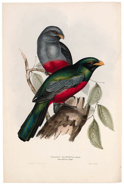 GOULD, John (1804-1881). A Monograph of the Trogonidae, or Family of Trogons. London: Richard and John E. Taylor, the author, [1835]-1838.