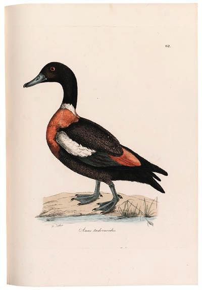 JARDINE, William, Sir (1800-18