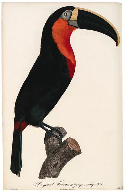 LEVAILLANT, Franois (1753-1824). Histoire naturelle des oiseaux de paradis et des rolliers, suivie de celle des toucans et des barbus. Paris: chez Denn le jeune, Perlet, [1801]-1806.